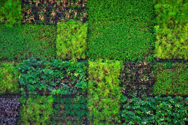 マイホームをより住みやすく!家庭でできる壁面緑化の方法を学ぼう!